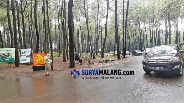Imlek 2021, Taman Safari Prigen Ajak Wisatawan Kenalan dengan 'Kerbau Logam' Jaliteng/Banteng Jawa