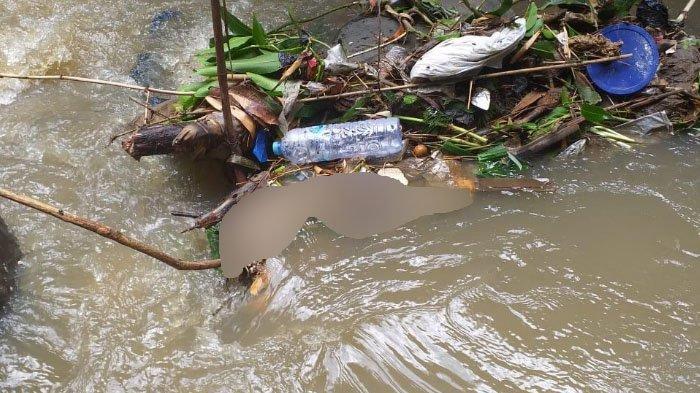 Mayat Bayi Membusuk Tersangkut Dahan Pohon di Sungai Metro, Kota Malang