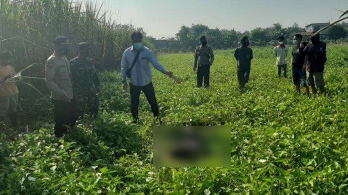 Mayat Pria Ditemukan di Kebun Kangkung, Ada Tanda Menghitam di Leher dan Dada Korban