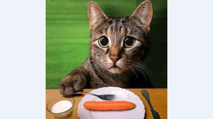 VIDEO : Sering Didatangi Kucing? Jangan Usir, Kalau Gelagatnya Seperti Ini Dipercaya Bawa Rezeki!