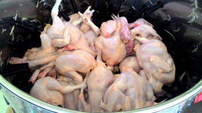 Suami Istri di Probolinggo Tewas saat Cabut Bulu Ayam, Begini Kejadiannya