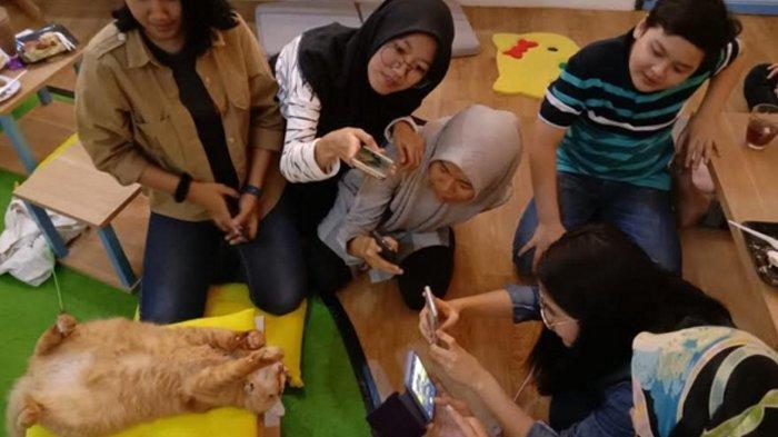Neko Kepo Cat and Cafe, Kedai Penggemar Kucing di Kota Malang, Masuk Saja Bayar Rp 15.000