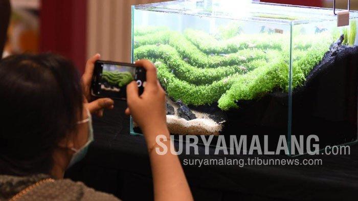 Tips Membuat Seni Aquascape bagi Pemula, Jangan Sembarangan Masukkan Ikan