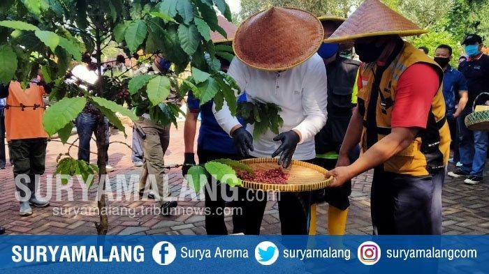 Wawali Kota Malang, Sofyan Edi Panen Kopi Di TPU Nasrani Sukun