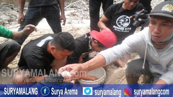 Bersihkan Sampah Plastik untuk Lindungi Penyu Bertelur, Aktifitas Relawan Penjaga Pantai Tulungagung