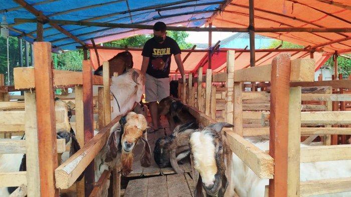 PPKM Darurat, Penjualan Kambing Kurban di Kota Malang Menurun Drastis