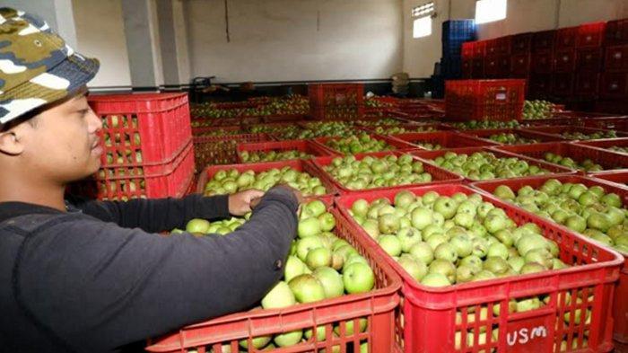DPRD Batu Usulkan Program Konsumsi Apel bagi Pelajar