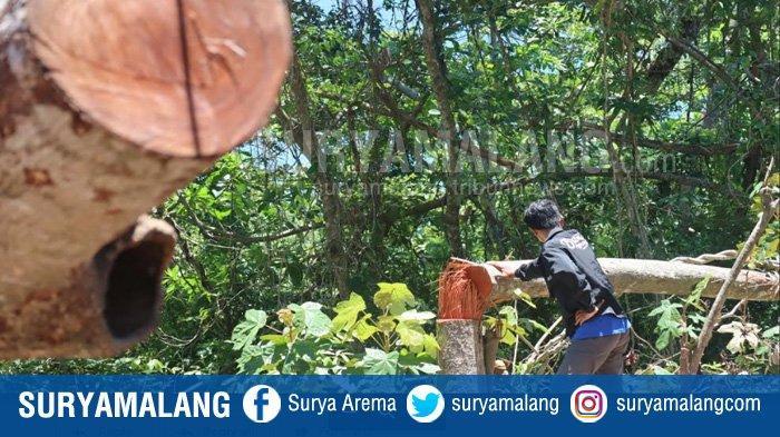 Polres Malang Janji Tangkap Pelaku Pembalakan Liar di Hutan Lindung Pantai Sendiki, Kabupaten Malang