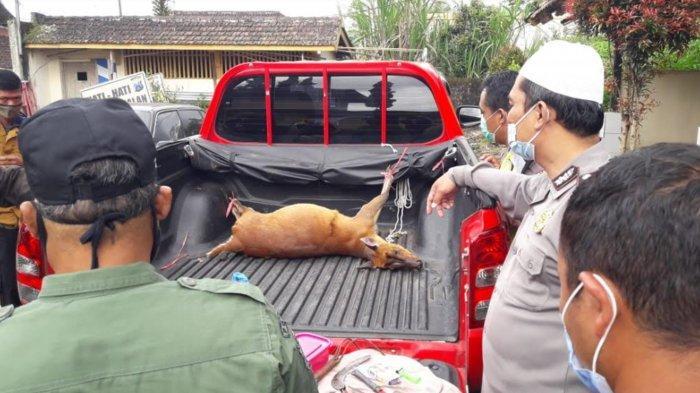Profauna Ungkap Perburuan Satwa Liar di Malang Ternyata untuk Daging Konsumsi