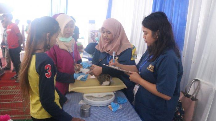 456 Kucing Catatkan Rekor MURI Pemeriksaan Kesehatan Di Universitas Brawijaya Malang
