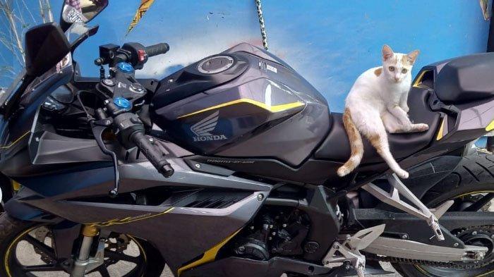 Pencurian Motor di Kota Malang, Ada 3 Motor Tapi Maling Mencuri Motor Honda CBR 250 RR
