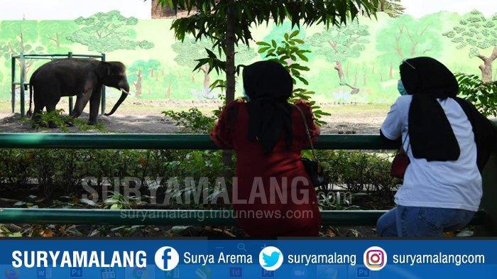 VIDEO : Suasana di Kebun Binatang Surabaya, Sepi Pengunjung Meski Libur Idul Adha