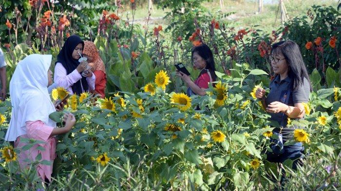 Menikmati Bunga Bermekaran Ragam Warna Di Taman Harmoni Surabaya Surya Malang