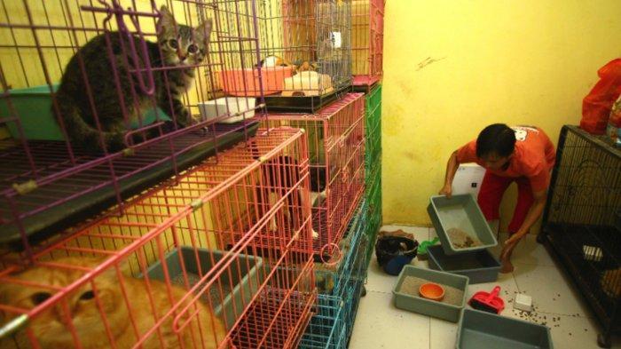 Larangan Mudik Lebaran 2021, Pengusaha Penitipan Hewan di Malang Ngaku Kena Dampaknya
