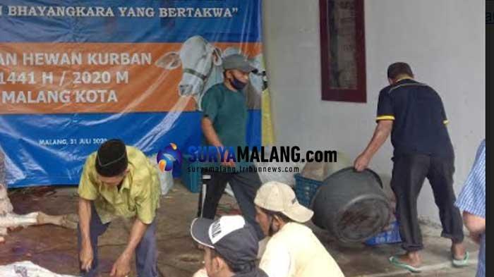 Gandeng Dokter Hewan UB, Polresta Malang Kota Gelar Penyembelihan 24 Hewan Kurban Idul Adha 2020
