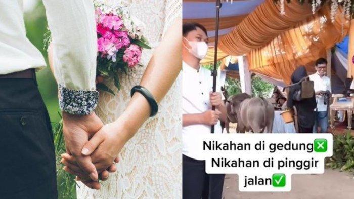 2 Ekor Kerbau Lewati Pelaminan di Pesta Pernikahan Bikin Pengantin Senyum, Sesi Foto Sampai Tertunda