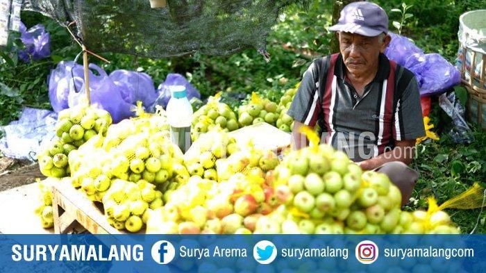 Pemkot Batu Segera Salurkan Bantuan Saprodi ke Petani Apel yang Terdampak Hama di Musim Penghujan