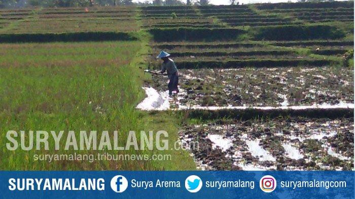 Kartu Tani di Kabupaten Malang Terbentur NIK Ganda