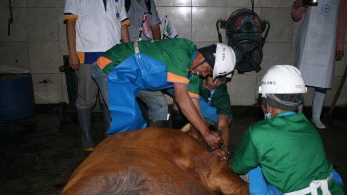 Antisipasi Lonjakan Kebutuhan Daging Jelang Ramadhan Dan Lebaran, RPH Kota Malang Akan Lakukan Sidak