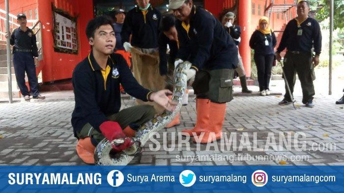 Jangan Sembarangan Menangkap Ular dan Kera! Ini Cara yang Dianjurkan Kebun Binatang Surabaya