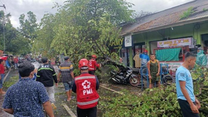 Pohon Kersen 5 Meter Roboh Hampir Timpa Warga Sukun Malang, Motornya Ketiban