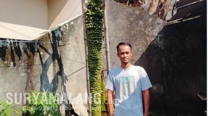 Ada Pohon Pisang Seribu di Pekarangan Rumah Warga Jalan Kresno, Kota Malang