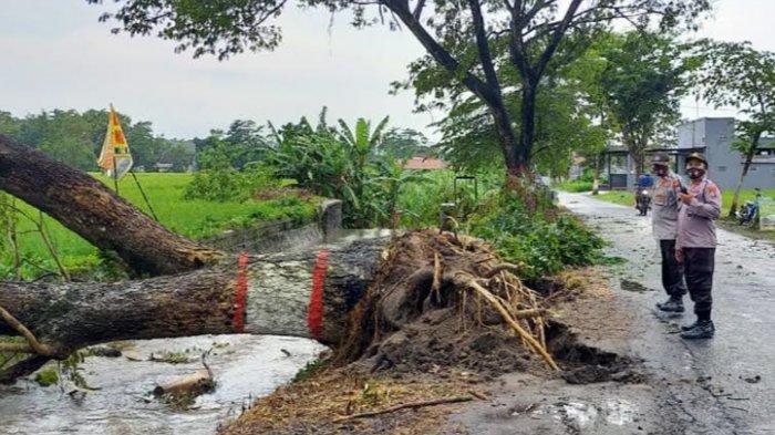 Angin Kencang Terjang Kota Blitar, 13 Pohon Tumbang