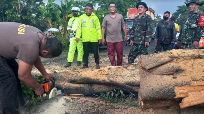 Hujan Deras Sebabkan Pohon Bringin Tumbang Tutup Jalan Nasional di Lumajang
