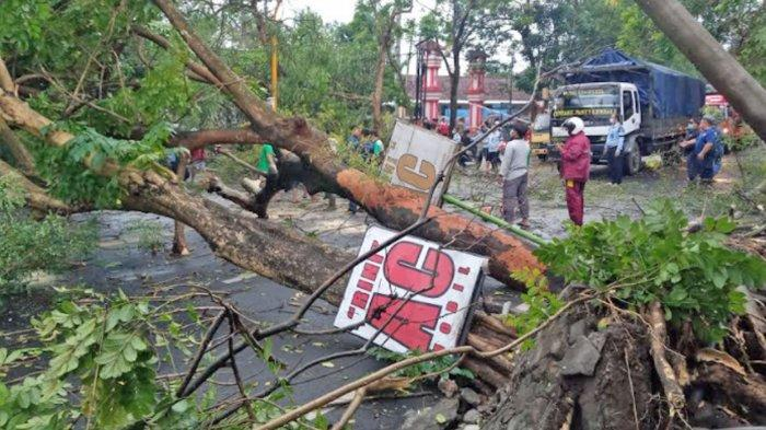 6 Pohon Tumbang di Jalan Nasional Kedungwaru Tulungagung, Kendaraan Macet 2 Kilometer Lebih