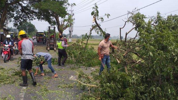 Pohon Tumbang Sempat Tutup Akses Jalan Alternatif Metatu-Cerme, Gresik