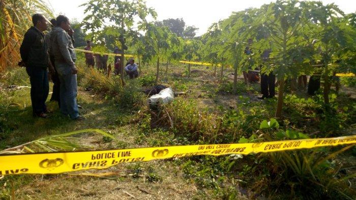Mayat Pria Ditemukan Warga di Tengah Kebun Pepaya di Kediri, Ada Luka di Telinga Keluarkan Darah
