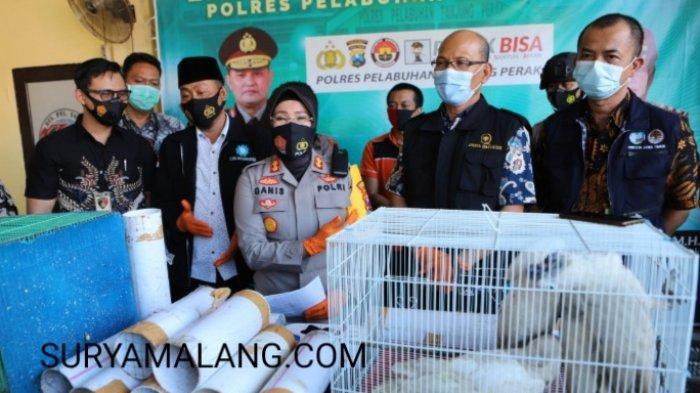 Polisi Surabaya Gagalkan Penyelundupan Ratusan Burung Dilindungi