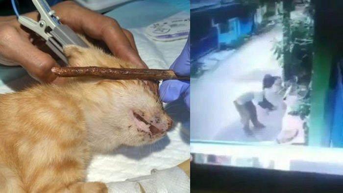 Pria Hobi Pukuli Kucing Sampai Mati, Kepergok Ngamuk dan Hampir Pukuli Emak-emak, Videonya Viral