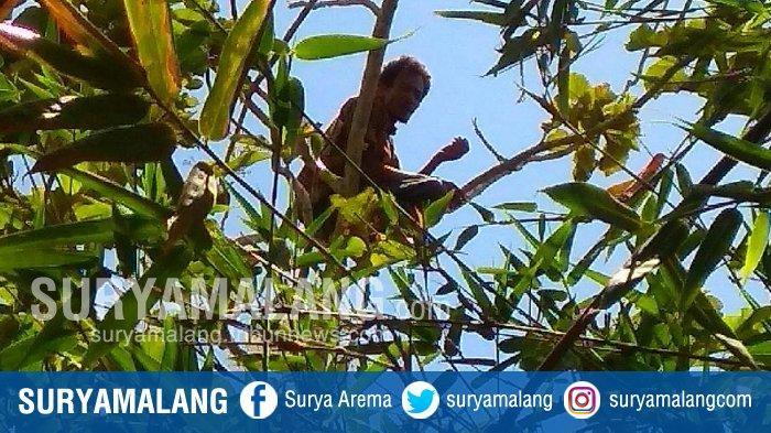 Probo Sutejo Bikin Heboh Tulungagung, Nekat Tinggal & Sholat di Pohon Dekat Kuburan Selama 3 Hari