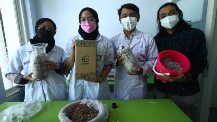 Mahasiswa UM Olah Limbah Uang Kertas Jadi Baglog Jamur Tiram, Dipasarkan dengan Label Mushgrow
