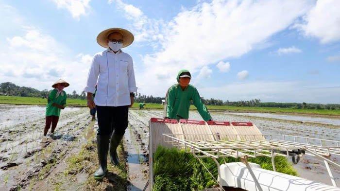 Pemkab Banyuwangi Sebut Produksi Beras di Masa Pandemi Corona Tetap Surplus