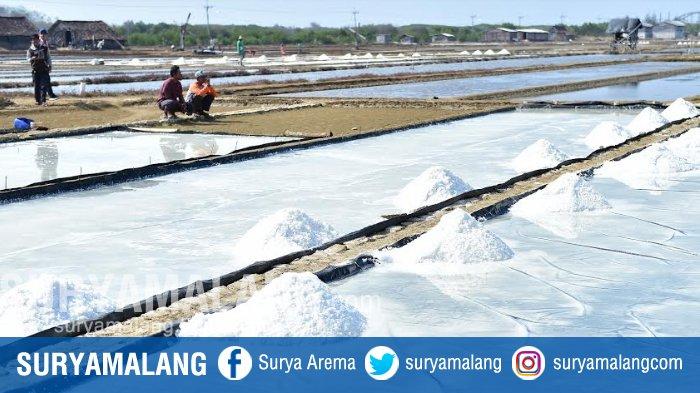 HMPG Jatim Optimistis Produksi Garam Nasional Akan Tumbuh, Untuk Menekan Garam Impor