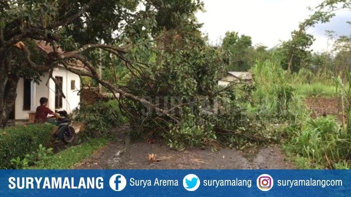 Angin Puting Beliung Sapu Dusun Taman Bondowoso, Rumah Hingga Musala Tertimpa Pohon