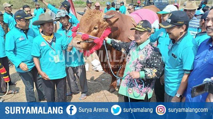 Bupati Madiun Tawarkan Sapi Limosin 1.030 Kilogram kepada Jokowi