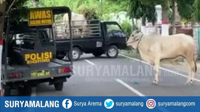Viral Sapi Ditembak Mati di Blitar, Berawal Brontak Tak Mau Dipotong hingga Ngamuk Terjang Warung