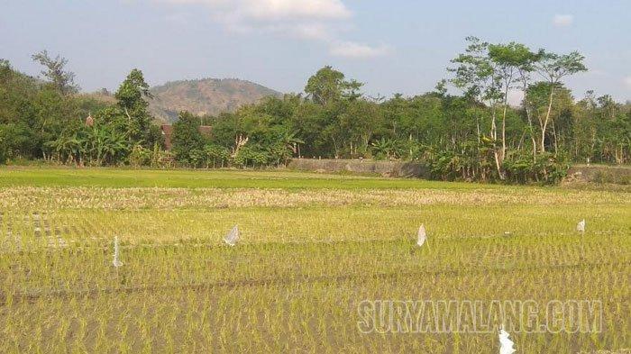 Siasat Mengatasi Dampak Musim Kering Berkepanjangan pada Sektor Pertanian dan Perkebunan