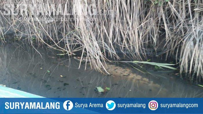 Berbekal Tongkat, Taher Selamat dari Gigitan Buaya di Sungai Batang Rawang, Kabupaten Agam