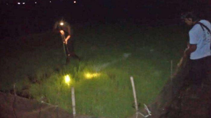 Warga Setor Bangkai Tikus ke Balai Desa Salamrejo, Trenggalek