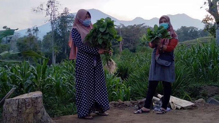 Menikmati Hamparan Sayur Segar di Sayur Omah Junggo (SOJU) Pasuruan