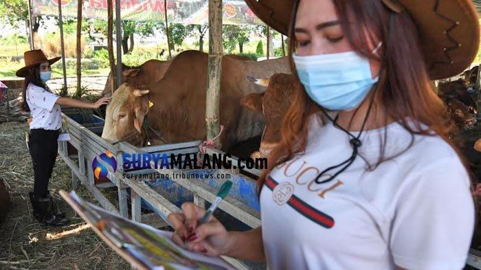 Beri Layanan Maksimal, Penjual Hewan Kurban di Kandang Sapi Widistia Surabaya Pakai Jasa SPG Cantik