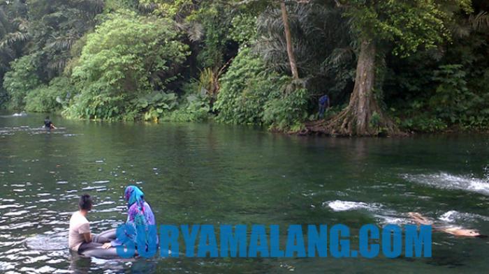 Ikan Kecil, Gangga Hijau, dan Pasir Hitam Jadi Ciri Khas Wisata Sumber Sirah, Kabupaten Malang