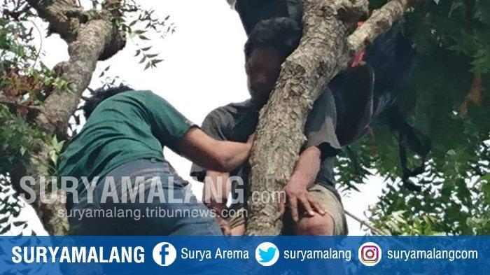 Bikin Penasaran, Kok Bisa Sih Pria Asal Tuban Ini Ditemukan Semaput di Atas Pohon? BPBD Turun Tangan