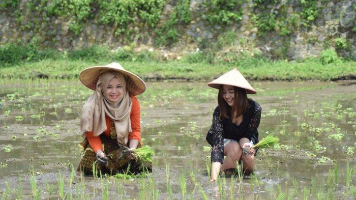 Ikhtiar Jaga Lahan Hijau, Kampung Budaya Polowijen Ajak Belasan Mahasiswa Cantik Tandur Pari