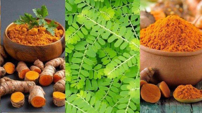 Daftar 6 Tanaman Herbal Dipercaya Bisa Tingkatkan Imunitas Cegah Covid-19: Temulawak Kunyit Meniran