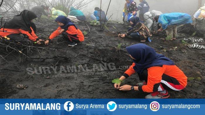 Ribuan Relawan Tandur Bareng 10 Ribu Cemara di Gunung Semeru, Aksi Konkret Reboisasi